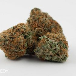 sweedy hybrid red rooster